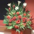 QF0856-opening congratulatory flowers