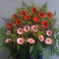 QF0866-opening congratulatory flowers