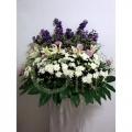 QFFS06 white pom lilies purple
